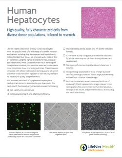 Brochure - Primary Human Hepatocytes Flyer